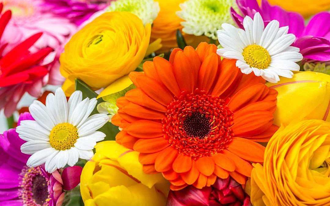 Choix couleurs des fleurs de deuil