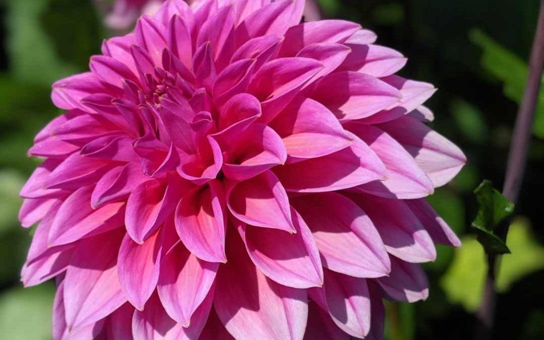 Crémation : le choix des fleurs