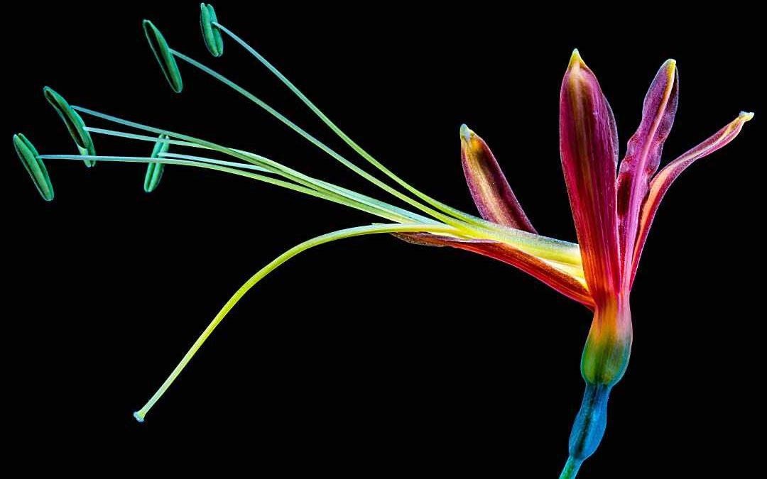 Choix Fleurs Exotiques