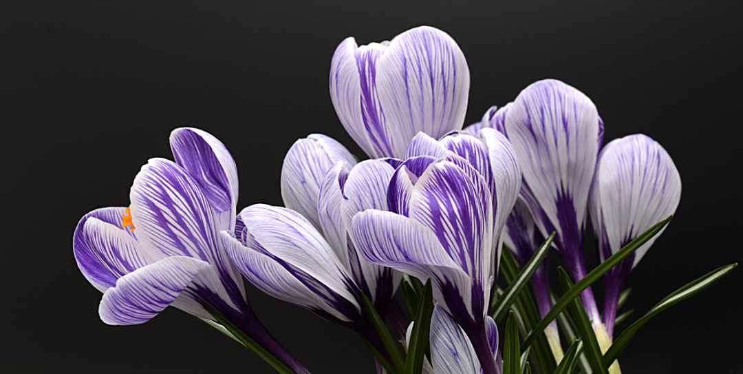 Choix Fleurs Deuil Naturelles
